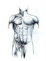 muscle image 00